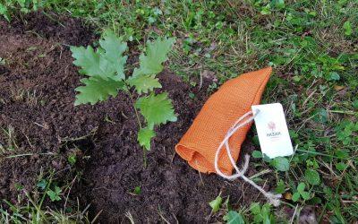 Plantarán en Suecia un retoño del Árbol de Gernika bajo los sones de la coral Garaizarko Matsorriak de Begoña